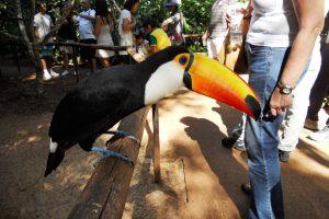 IGU – Birdpark