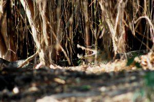 transpantaneira jacare swamp iicvaug15